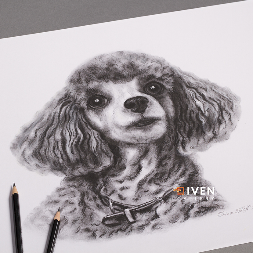 IVEN_Gallery_Irina_Iven_Hund_Pudel