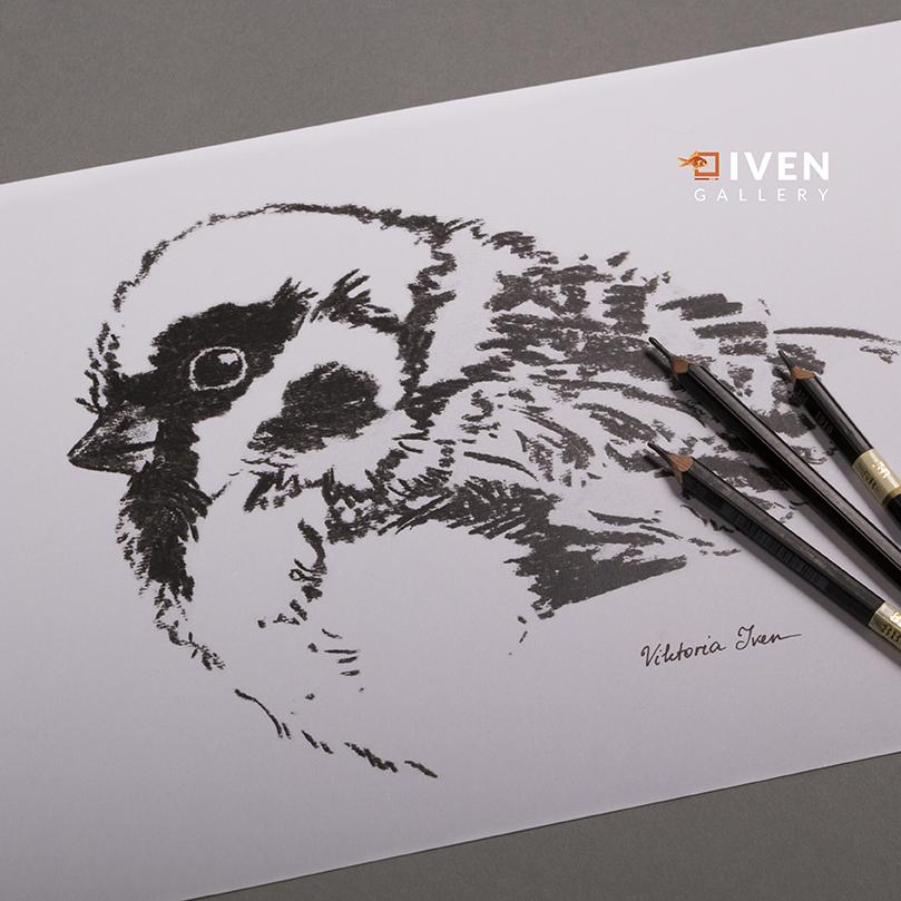 IVEN_Gallery_Viktoria_Iven_Spatz_Zeichnung